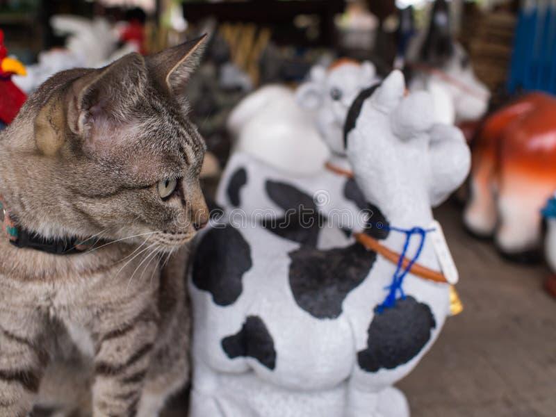 Tabby Cat Sits em uma boneca do assoalho fotografia de stock royalty free