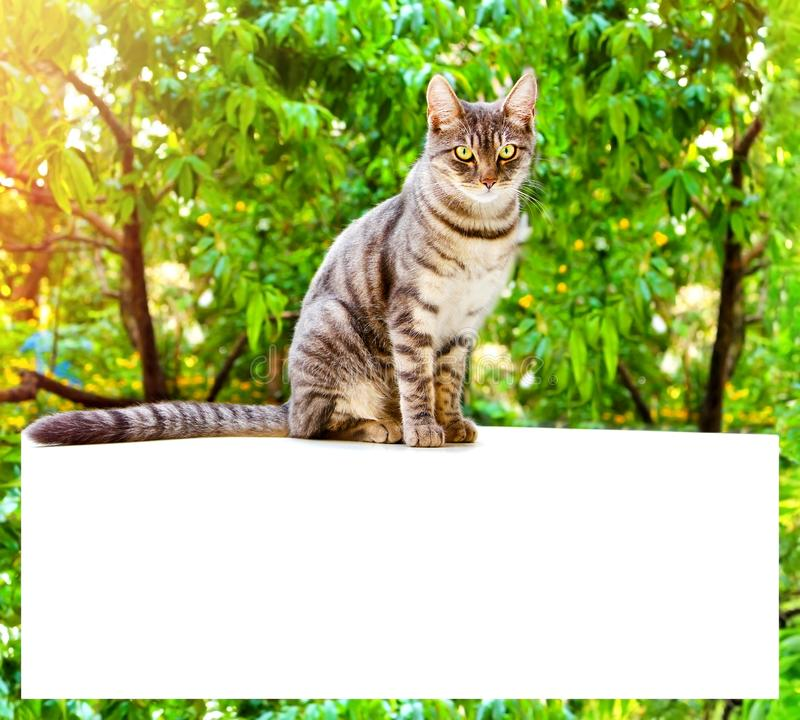 Tabby cat sits on a white surface on a background of green leave. S of the tree. Banner for website. Frame with place for text royalty free stock photos