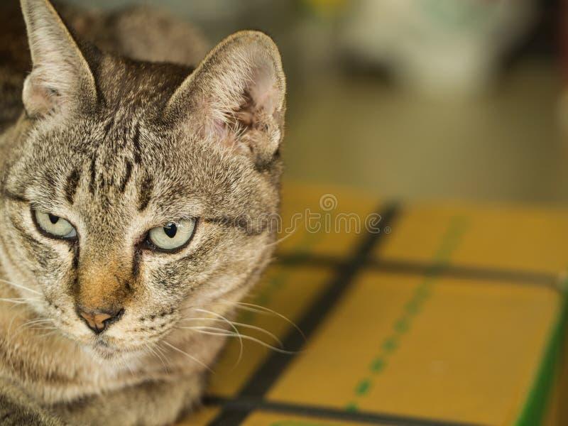 Tabby Cat Sitting auf dem Kasten stockfotos
