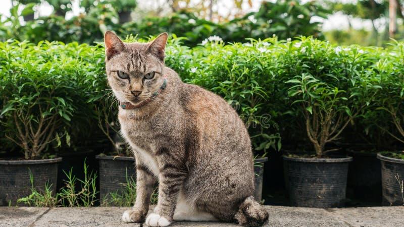 Tabby Cat Sitting nel giardino floreale fotografia stock libera da diritti