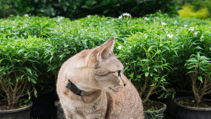 Tabby Cat Sitting no jardim fotografia de stock