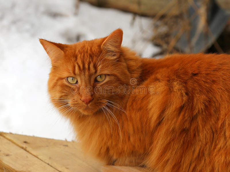 Tabby Cat Sitting Outside stock foto