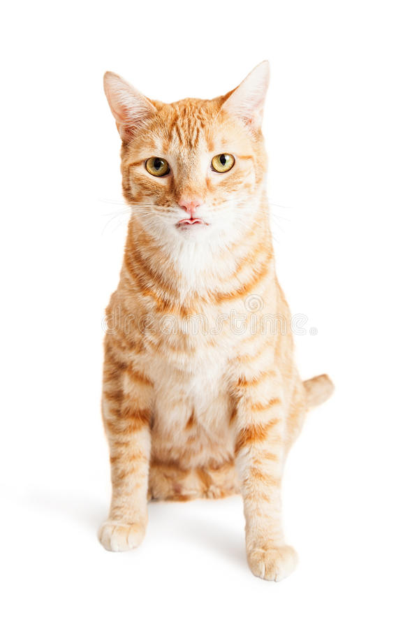 Tabby Cat Sitting Tongue Out orange mignonne image stock