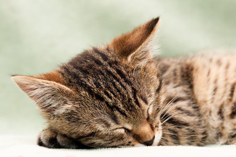 Download Tabby cat sleep stock photo. Image of home, focus, kitten - 17805498
