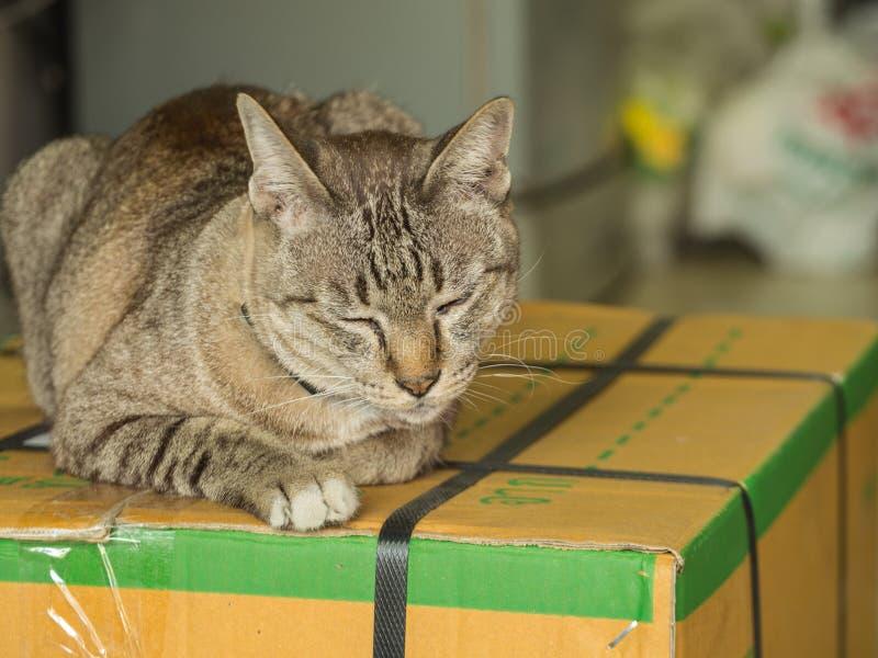 Tabby Cat Sleeping auf dem Kasten lizenzfreie stockbilder