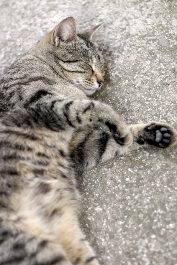 Tabby cat sleeping. Brown tabby cat sleeping. Vertical format, selective focus stock images