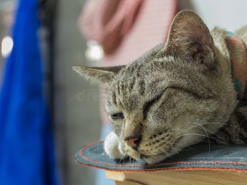 Tabby Cat Sleeping Calmly lizenzfreie stockfotografie