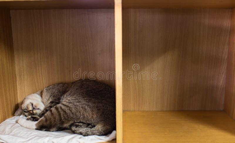 Tabby Cat Sleeping em uma cremalheira fotografia de stock