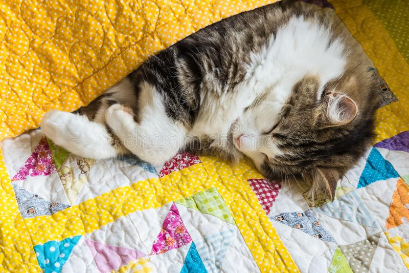 Tabby cat sleeping wrapped up in colourful quilt cover. Closeup of tabby cat sleeping wrapped up in colourful quilt cover royalty free stock photo