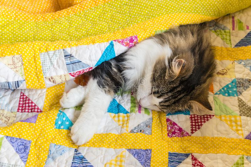Tabby cat sleeping wrapped in yellow quilt cover stock photo