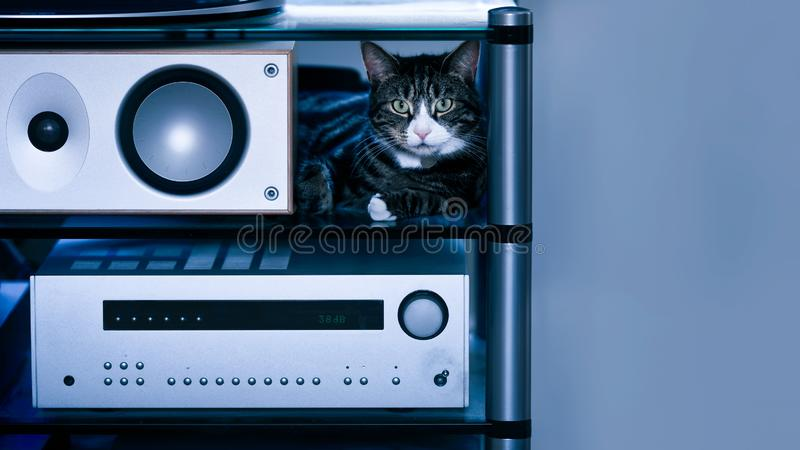 Tabby Cat with Speaker in Hi-fi Rack royalty free stock images