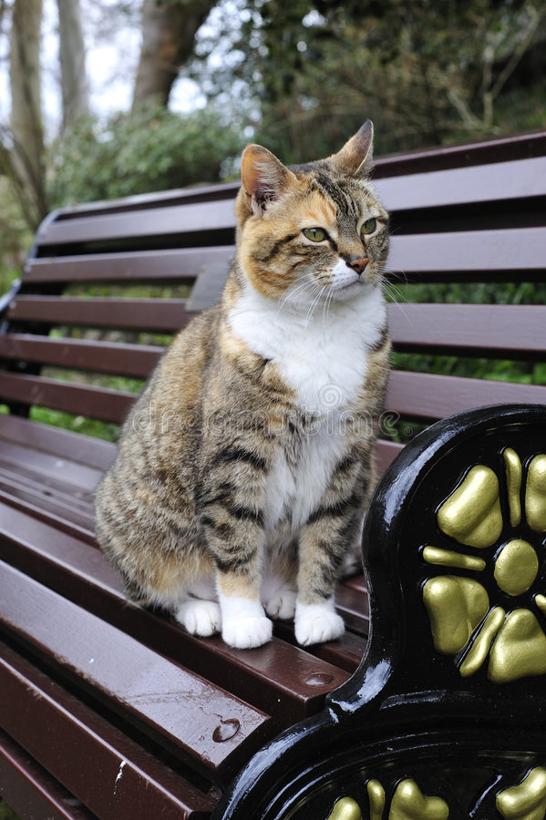 Download Tabby Cat Staring stock image. Image of kitty, cuddly - 5001417
