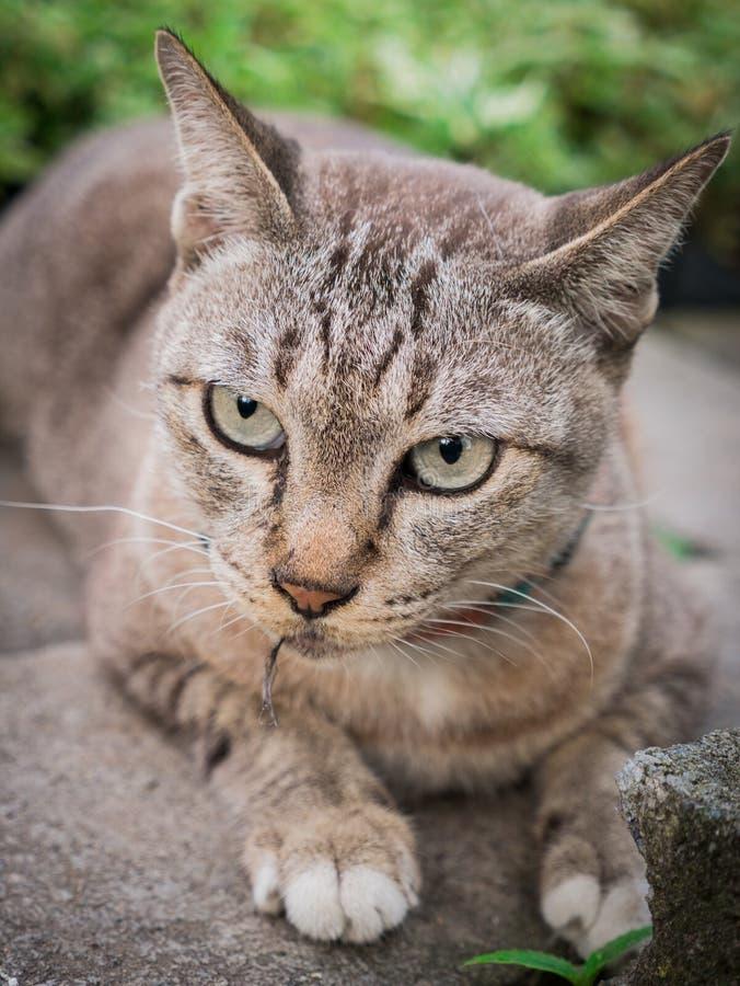 Tabby Cat Staring em um outro intruso imagem de stock