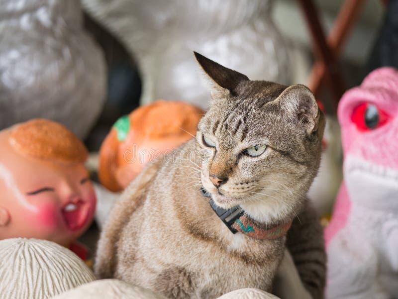 Tabby Cat stava andando litigare con una bambola immagine stock libera da diritti