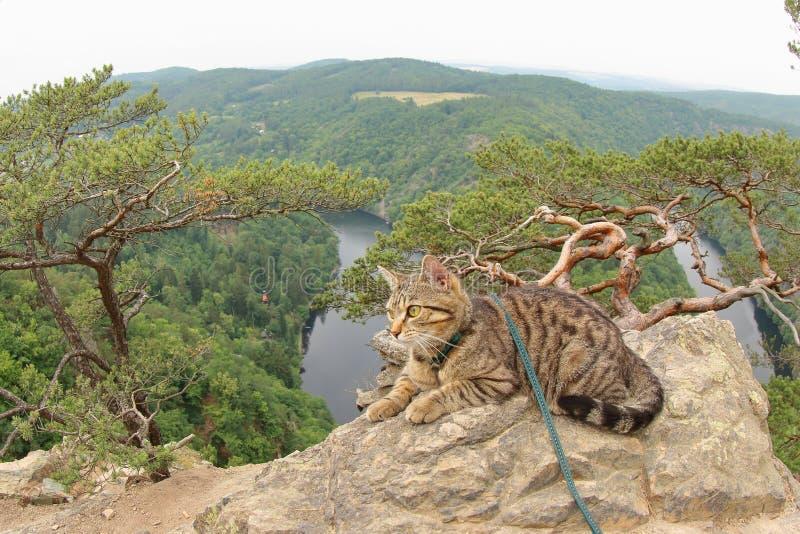 Tabby Cat an Vyhlidka Major, Czechia lizenzfreie stockfotografie
