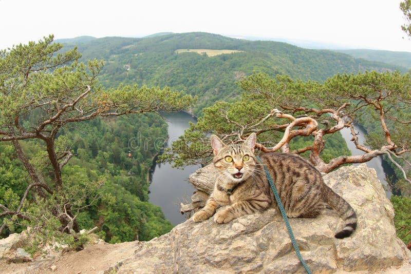 Tabby Cat an Vyhlidka Major, Czechia stockfoto