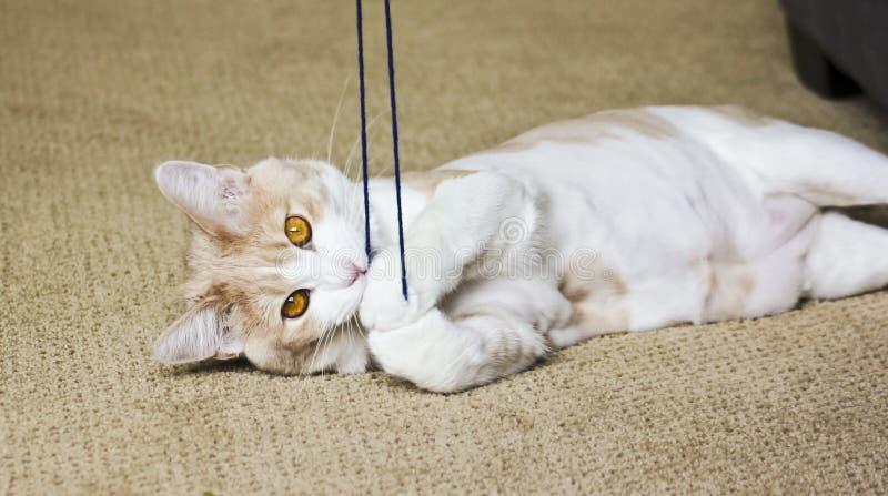 Tabby Cream Cat Playing mit Garn stockbild