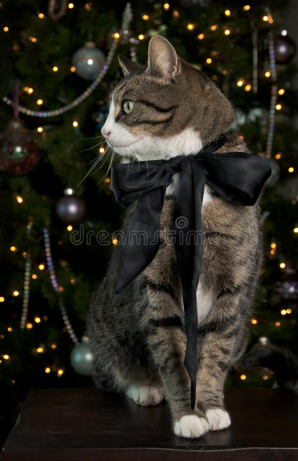 Tabby-Katze-Portrait lizenzfreie stockbilder