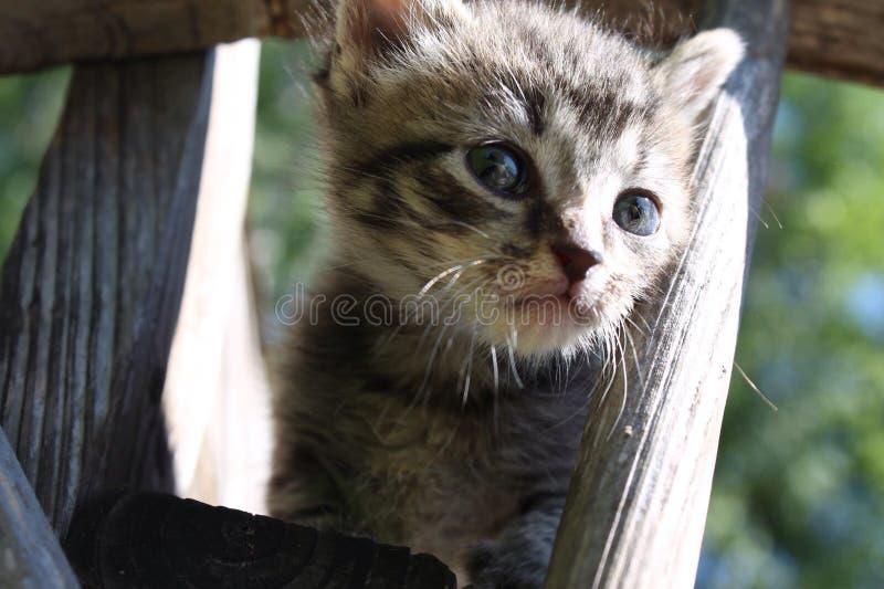 Tabby Kitten stock afbeelding