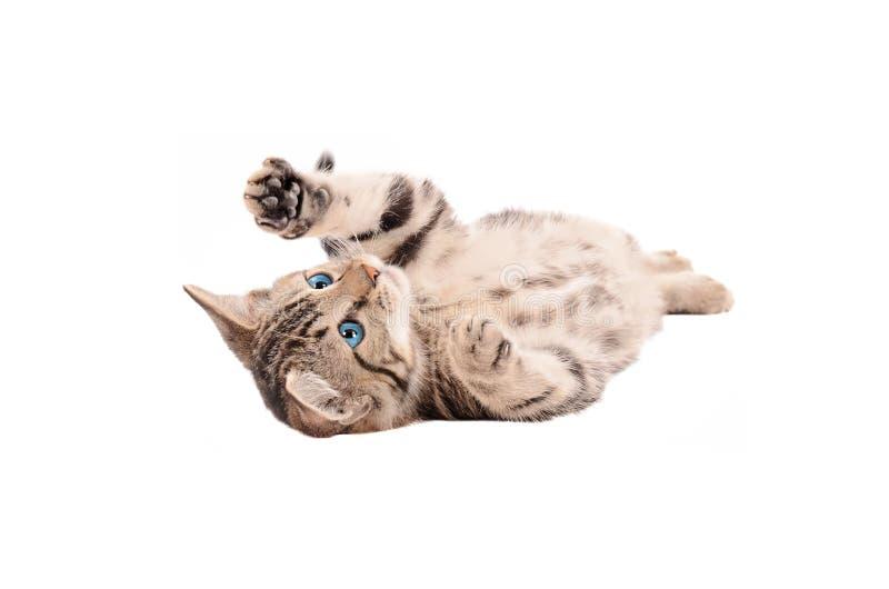 Tabby Kitten adorabile che mette sulla sua parte posteriore fotografie stock