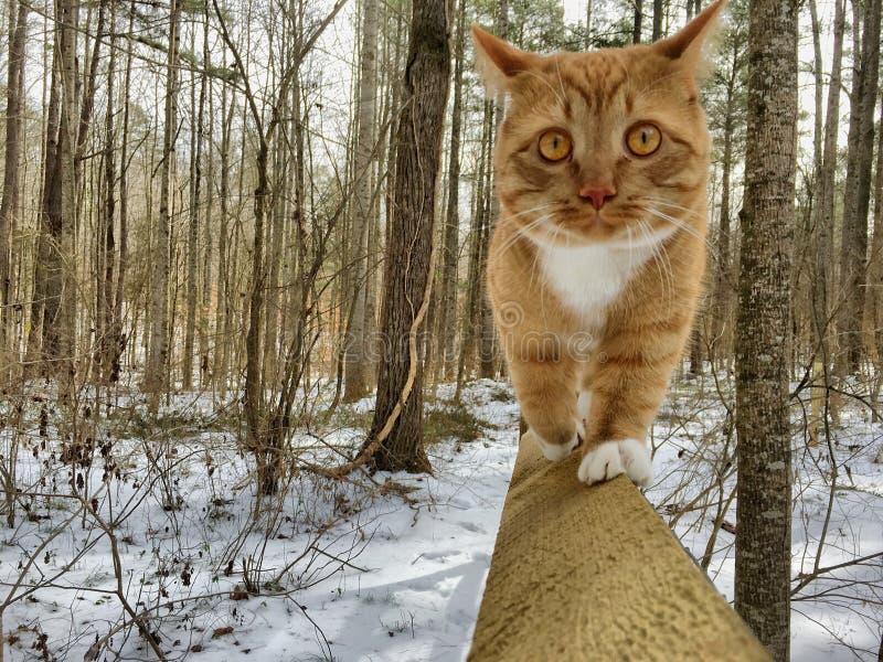 Tabby Kitten auf Zaun lizenzfreies stockfoto