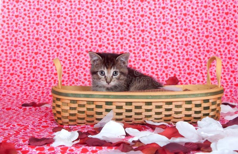 Tabby Kitten In Basket Stock Photo