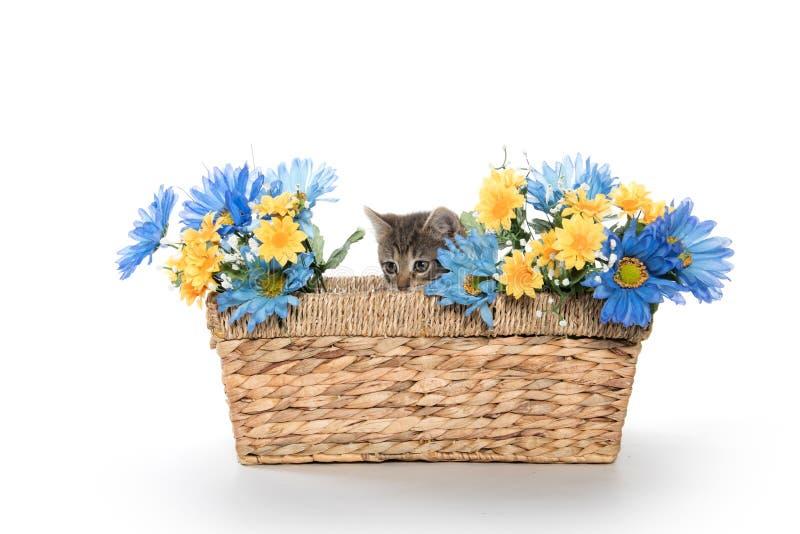 Tabby kitten in basket with flowers stock photo
