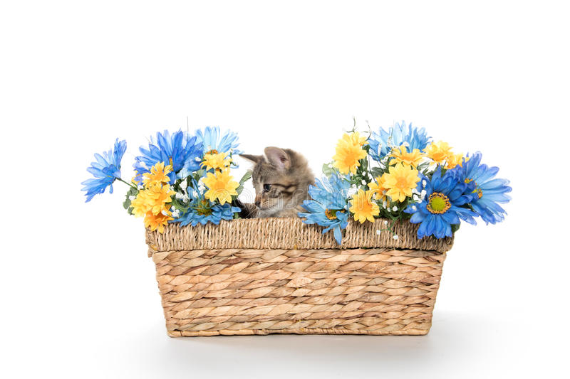 Tabby kitten in basket with flowers royalty free stock photos