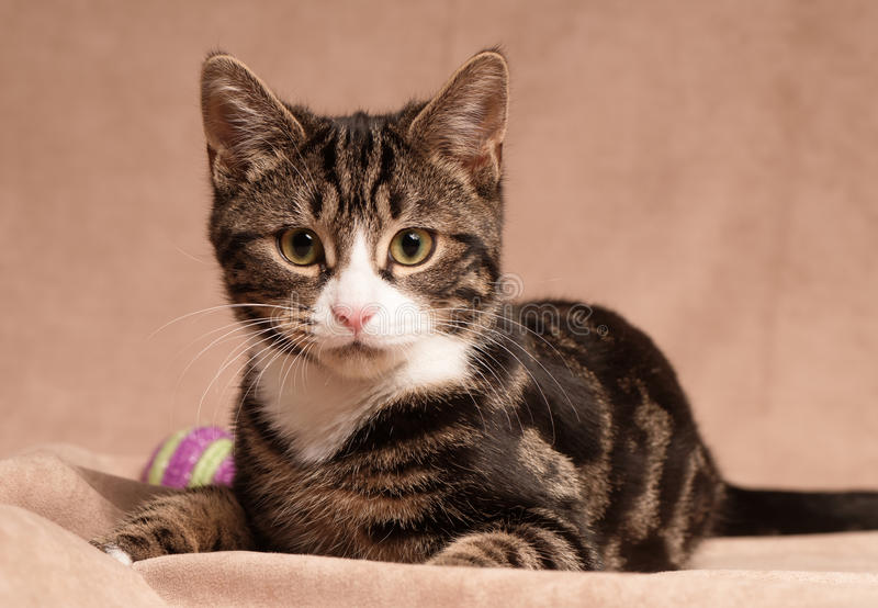 Tabby Kitten com bola fotografia de stock