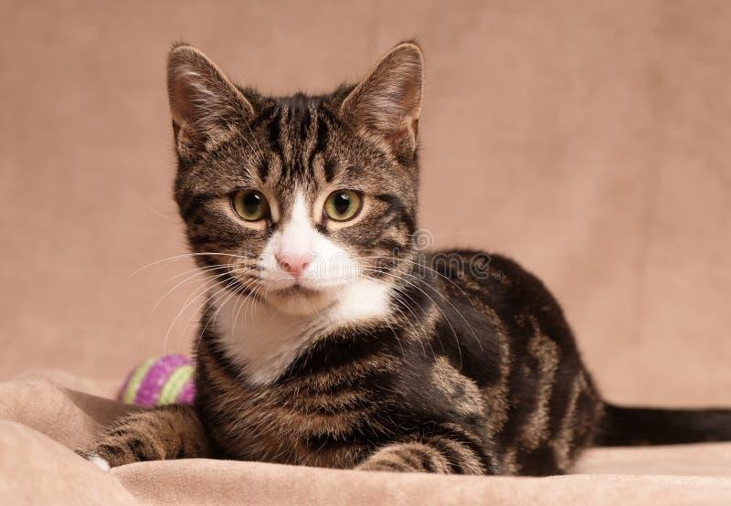 Tabby Kitten con la bola fotografía de archivo