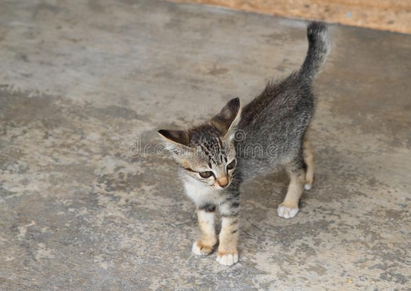 Tabby kitten on concrete floor. Cute little cat - tabby kitty standing on concrete floor with tail up stock photo