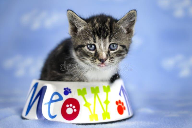 Tabby Kitten die met blauwe ogen in voedselkom zitten stock afbeelding
