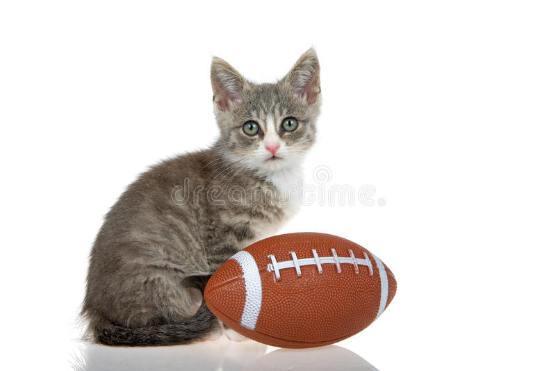 Tabby kitten with football isolated on white background royalty free stock photography