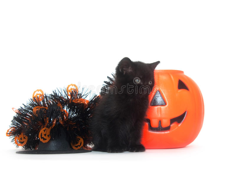 Tabby kitten with Halloween decorations royalty free stock images