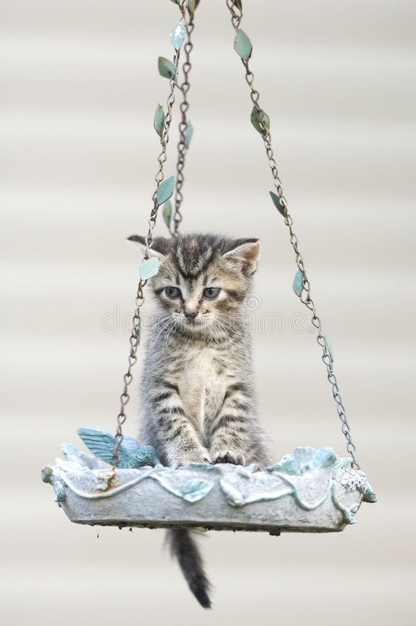 Free Tabby Kitten In A Birdfeeder Royalty Free Stock Photography - 5475627