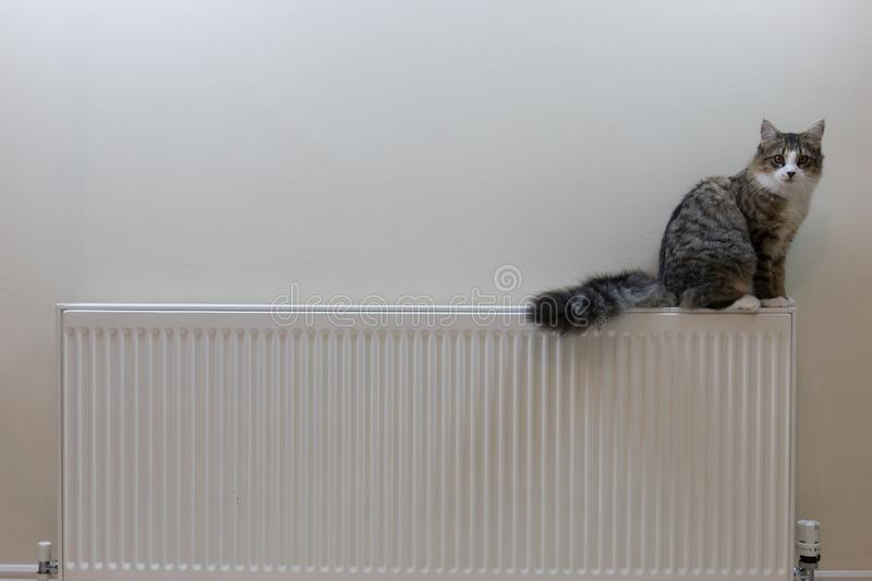 Tabby kitten lying on top of a radiator stock images