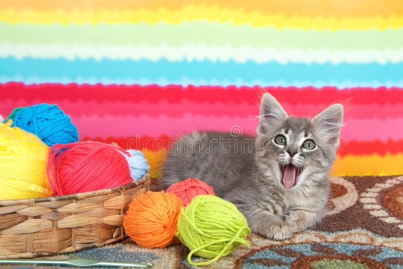 Tabby kitten with mouth open next to balls of yarn stock photography