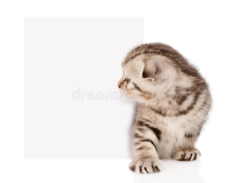 Tabby kitten peeking out of a blank sign. isolated stock photo