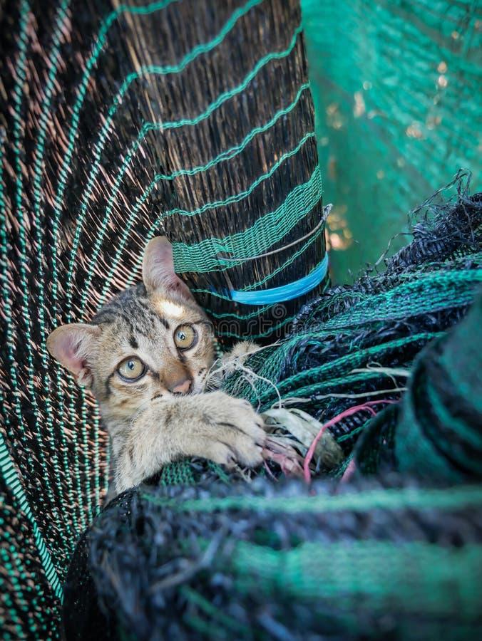 Tabby Kitten Played en la red imagen de archivo