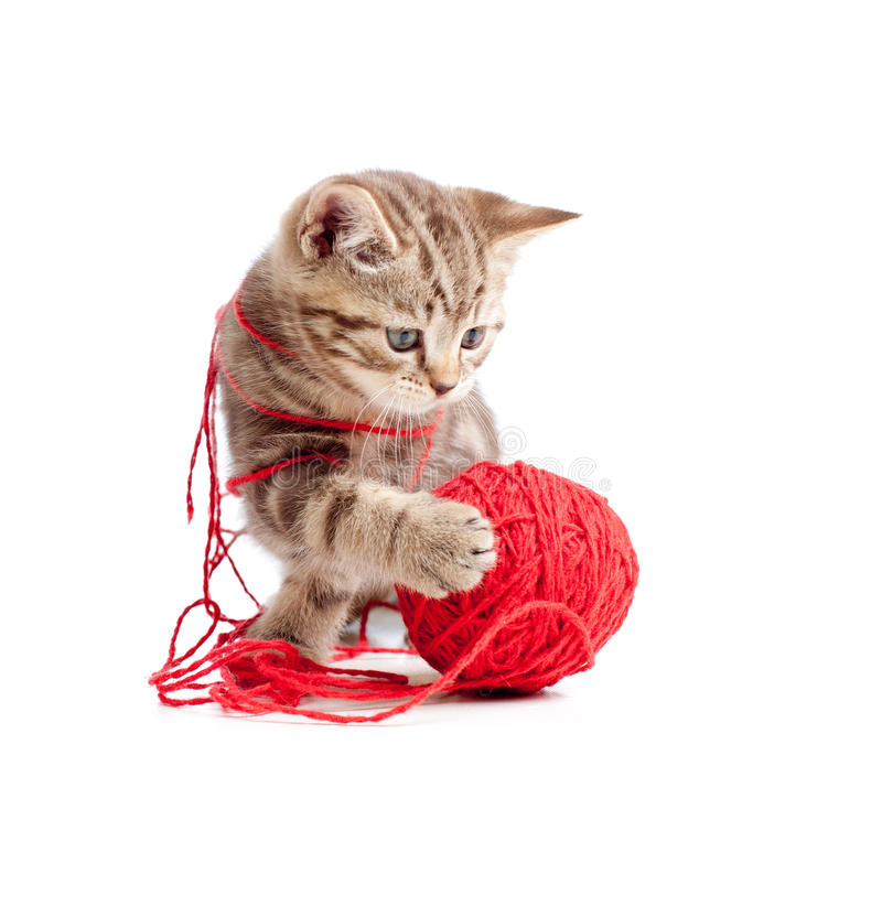 Tabby kitten playing red clew royalty free stock images