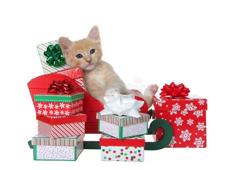 Tabby kitten pondant en traîneau miniature débordant de cadeaux image libre de droits