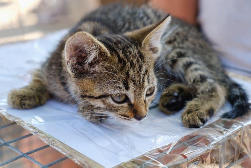 Tabby kitten sitting on white stock photo