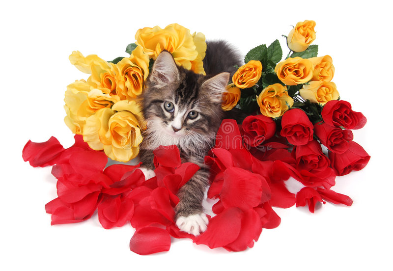Tabby kitten surrounded by roses. royalty free stock photos