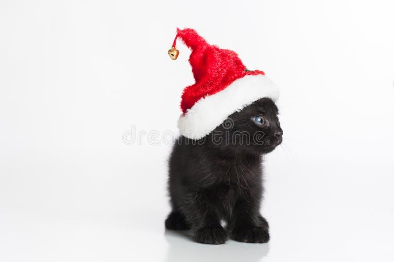 Tabby Kitten Wearing negra Santa Hat roja y blanca fotografía de archivo