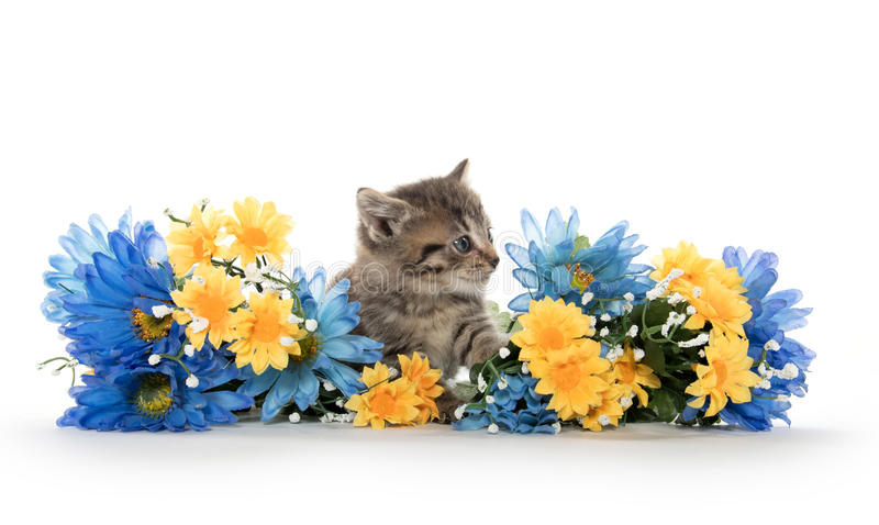 Tabby kittens with flowers stock images