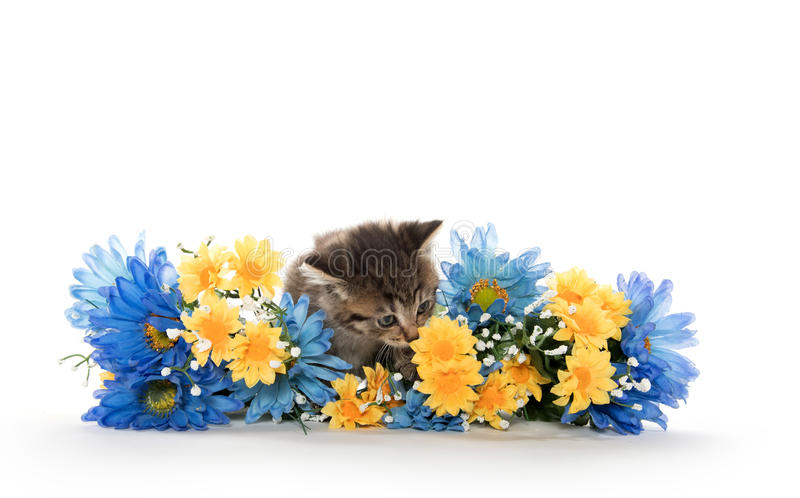 Tabby kittens with flowers royalty free stock photography