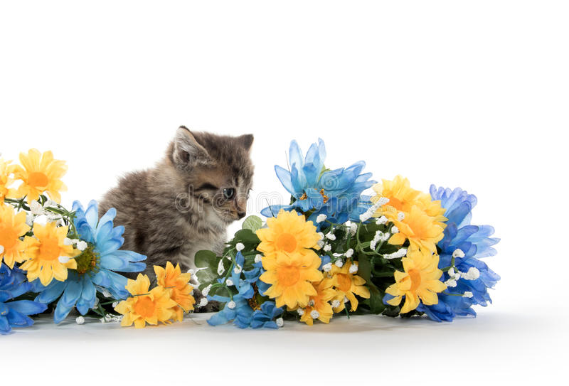 Tabby kittens with flowers stock image