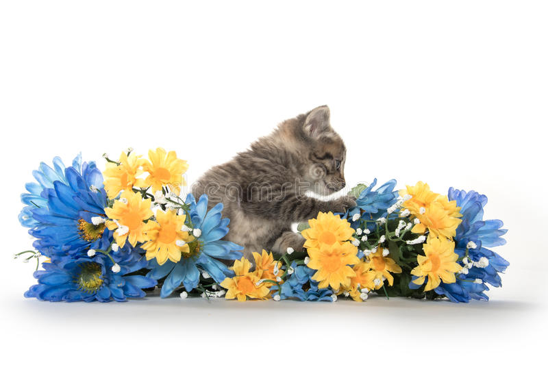 Tabby kittens with flowers stock photos