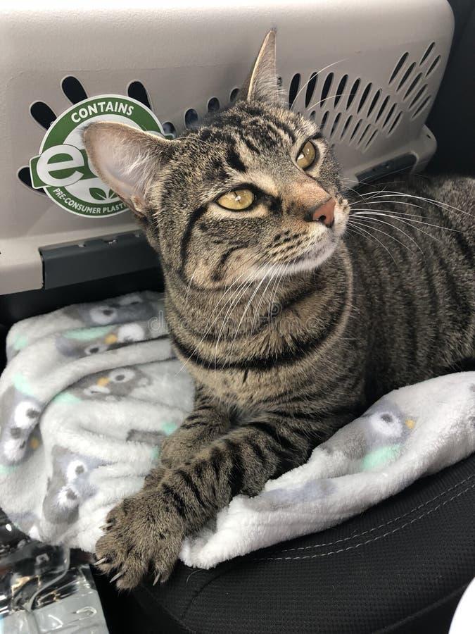 Tabby Kitty stock fotografie