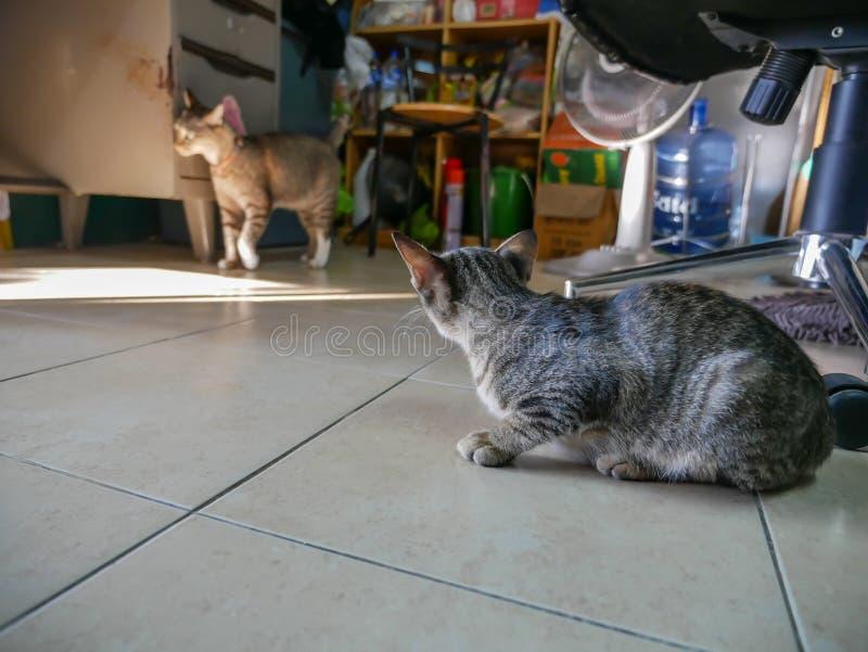 Tabby Kitty Breaking dispersa na sala fotos de stock royalty free